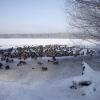 winter_webellinsee2-deee5440ef31a782d8d183cc7e73094a